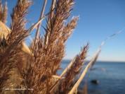 mon-herbst-winter-2016-17-strand-bei-kobbelgard-richtung-osten-087