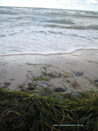 mon-herbst-winter-2016-17-strand-bei-ulvshale-076