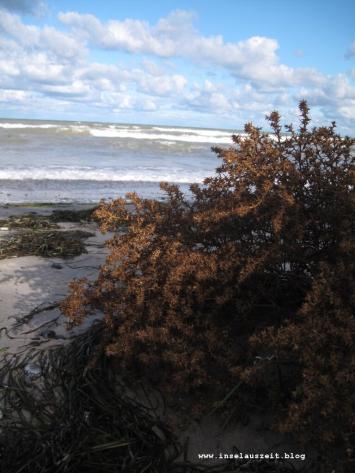 mon-herbst-winter-2016-17-strand-bei-ulvshale-181