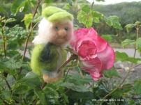 Hier blühen Rosen ...
