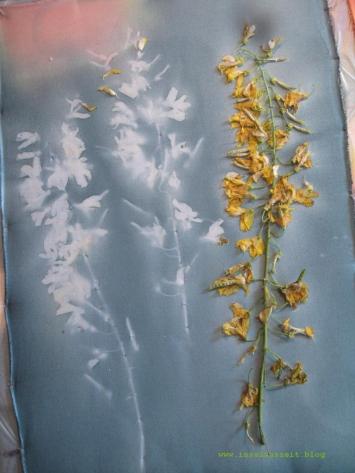 Sunprinting Pflanzendruck Emilielunden 127