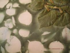 Sunprinting Pflanzendruck Emilielunden 144