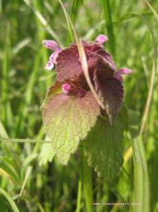 Møn Frühjahrsblumen 256