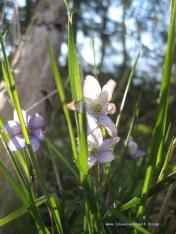 Møn Frühjahrsblumen 276
