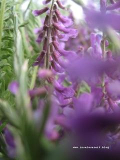 Møn Sommerblumen 140