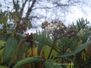 Botanischer Garten Geografisk Have Kolding 192