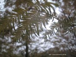 Botanischer Garten Geografisk Have Kolding 227