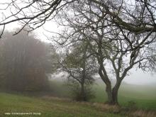 Grundtvig Skyerne gråner dänisches Lied übersetzt Bäume an Wiese Herbstnebel