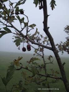 Grundtvig Skyerne gråner dänisches Lied übersetzt rote Beeren im Nebel