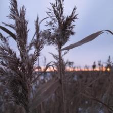 Grundtvig Skyerne gråner dänisches Lied übersetzt Sonnenuntergang Schnee Meer Insel Nyord