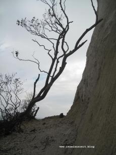 Kreidefelsen Møns Klint Strand und Abbruch nördlich vom Leuchtturm Møns Fyr 198