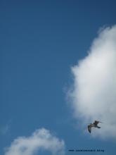 Möwe am Himmel über der Ostsee