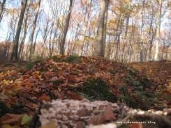 Møn Klinteskov - Jydelejet - Klint Kreidefelsen Herbst efterår 036