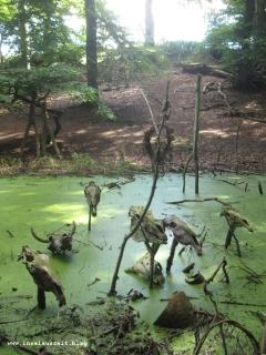 Sagnlandet Lejre Freilichtmuseum Steinzeit Bronzezeit Eisenzeit Dänemark 095