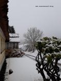 Winterbilder aus Dänemark Insel Møn Busene im Schnee