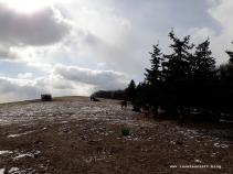 Winterbilder aus Dänemark Insel Møn Kühe vor Wald