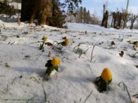 Winterbilder aus Dänemark Winterlingen im Garten